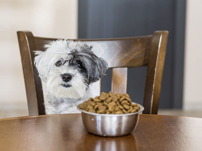 Dog and dog food- everything you want to know