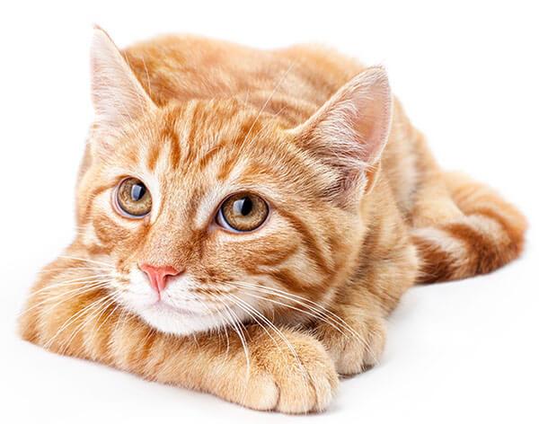 High quality veterinary care near Short Pump