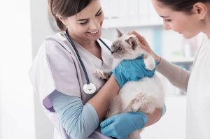 Spaying Your Pet Could Save Her Life